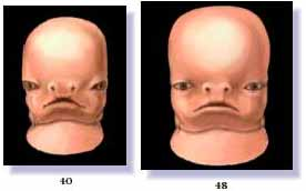 Stages of development of Human Face (in days)